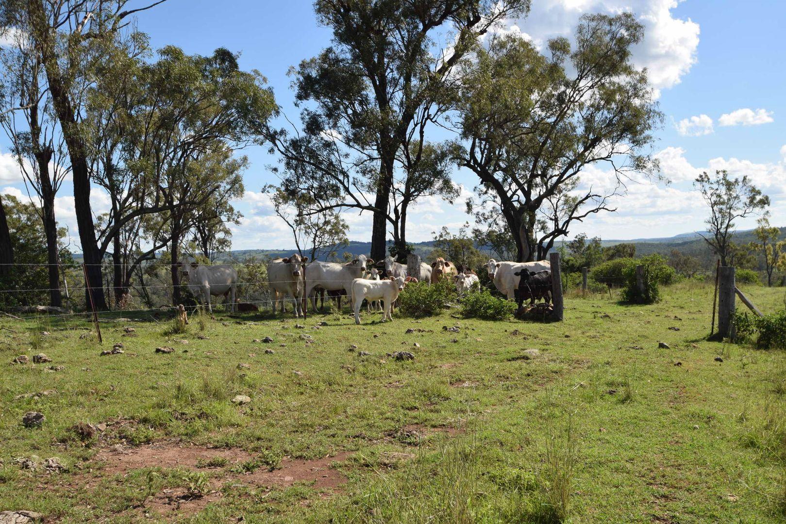225 Wild Deer Drive, Taromeo QLD 4306, Image 2
