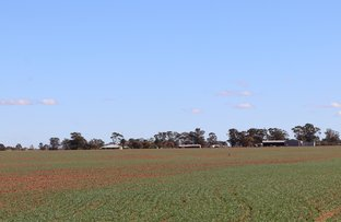 Picture of 1466 WEST WYALONG CONDOBOLIN RD, West Wyalong NSW 2671