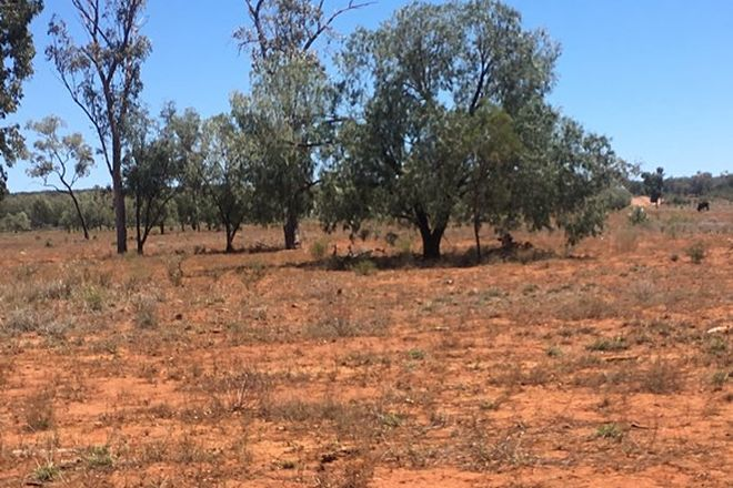 """Picture of """"East Surprise"""", ST GEORGE QLD 4487"""