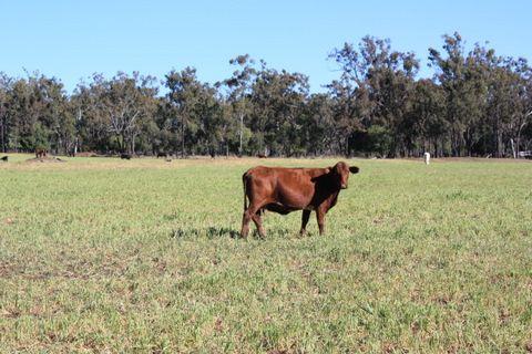 246 Roberts Road, Clifton QLD 4361, Image 0