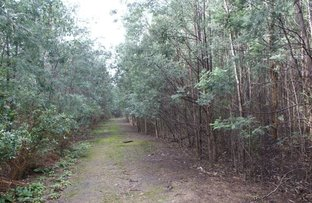 Picture of Lot 1 Maloney's Road, Parkham TAS 7304