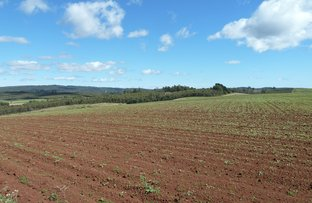 Picture of Mackenzies Road, Pipers Brook TAS 7254