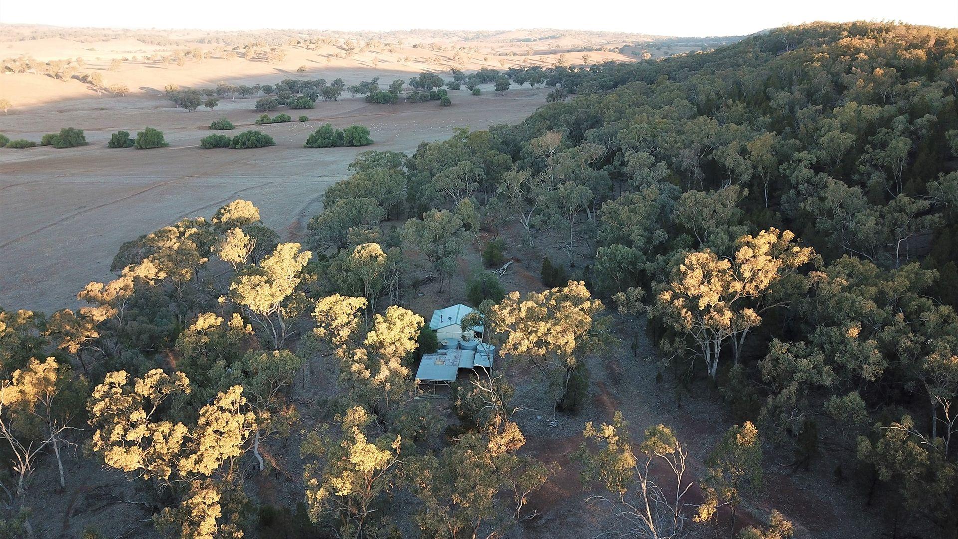 'Fox Hill' 573 Blathery Creek Road, Neurea NSW 2820, Image 2
