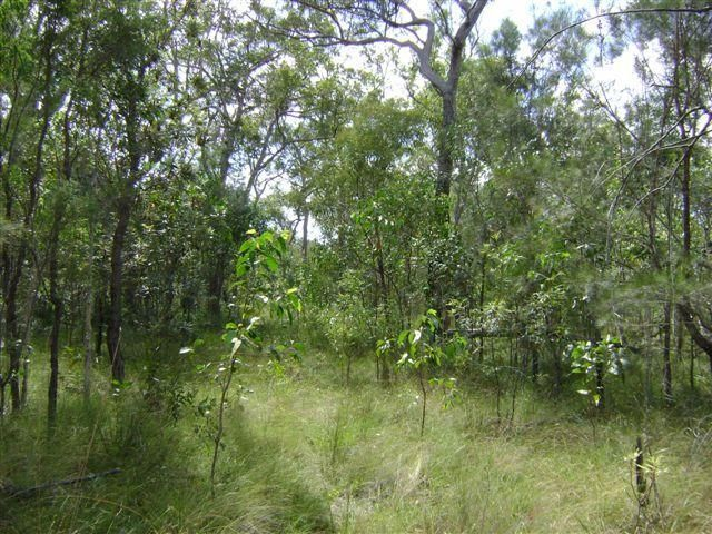 590 Pacific Drive, Deepwater QLD 4674, Image 0