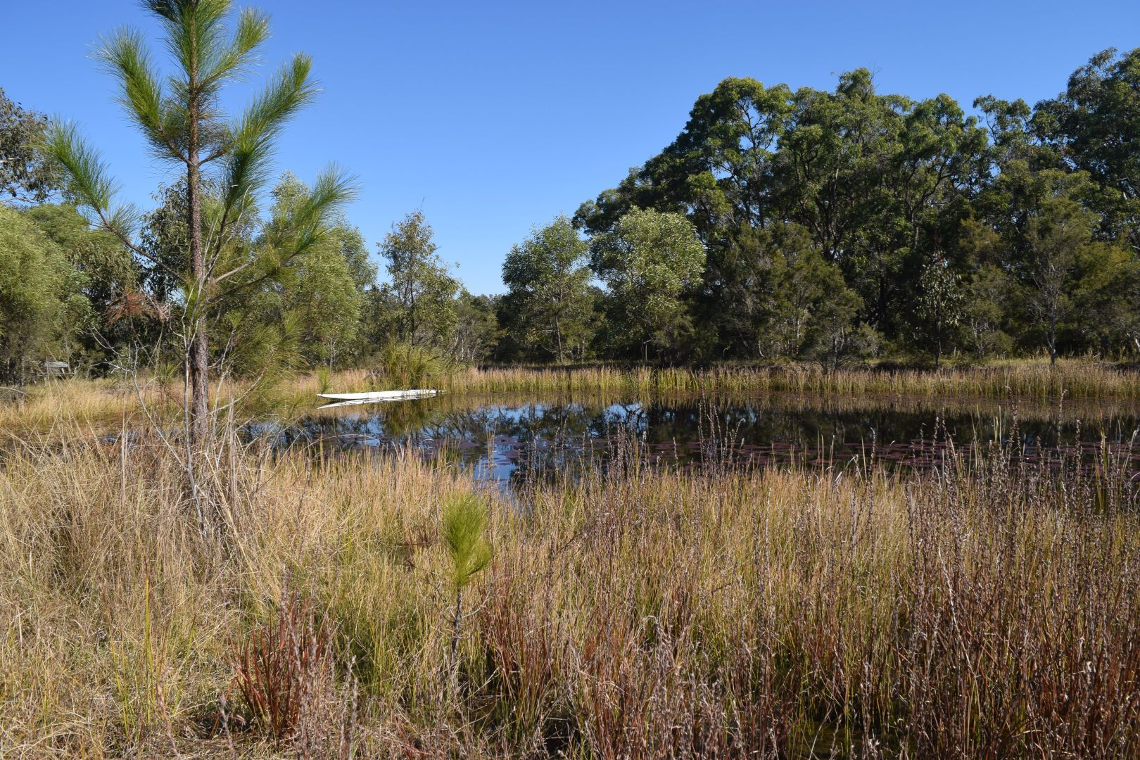 54 Florda Red Drive, Wells Crossing NSW 2460, Image 1