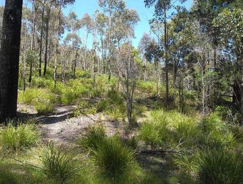 Lot 2 Nicklasons Road, Pyengana TAS 7216, Image 2
