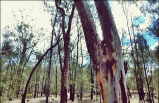 Picture of Pine Ridge Rd, Condamine Farms QLD 4357