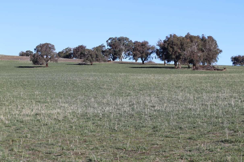 1380 Brawlin Rd, Cootamundra NSW 2590, Image 0
