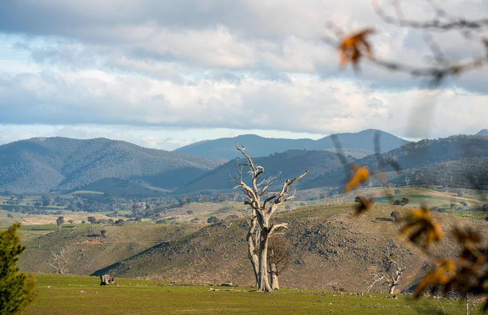 2963 Dog Trap Road, Jeir NSW 2582, Image 2