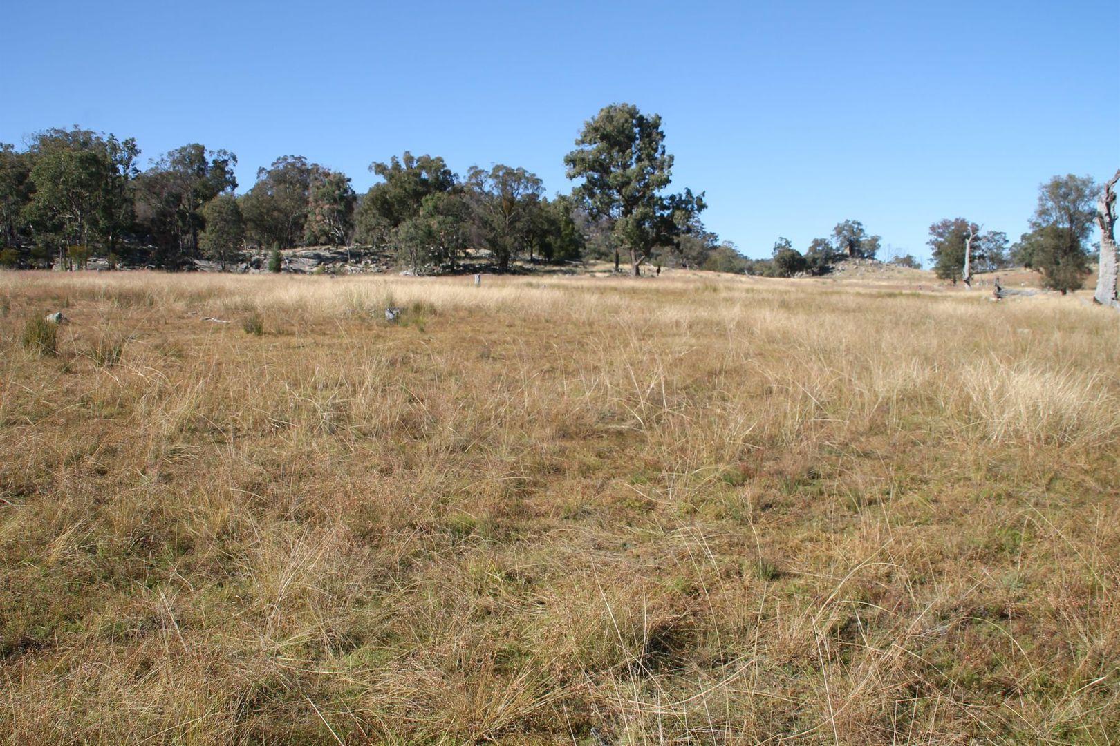 Lot 47 Gunyah Road, Tenterfield NSW 2372, Image 2