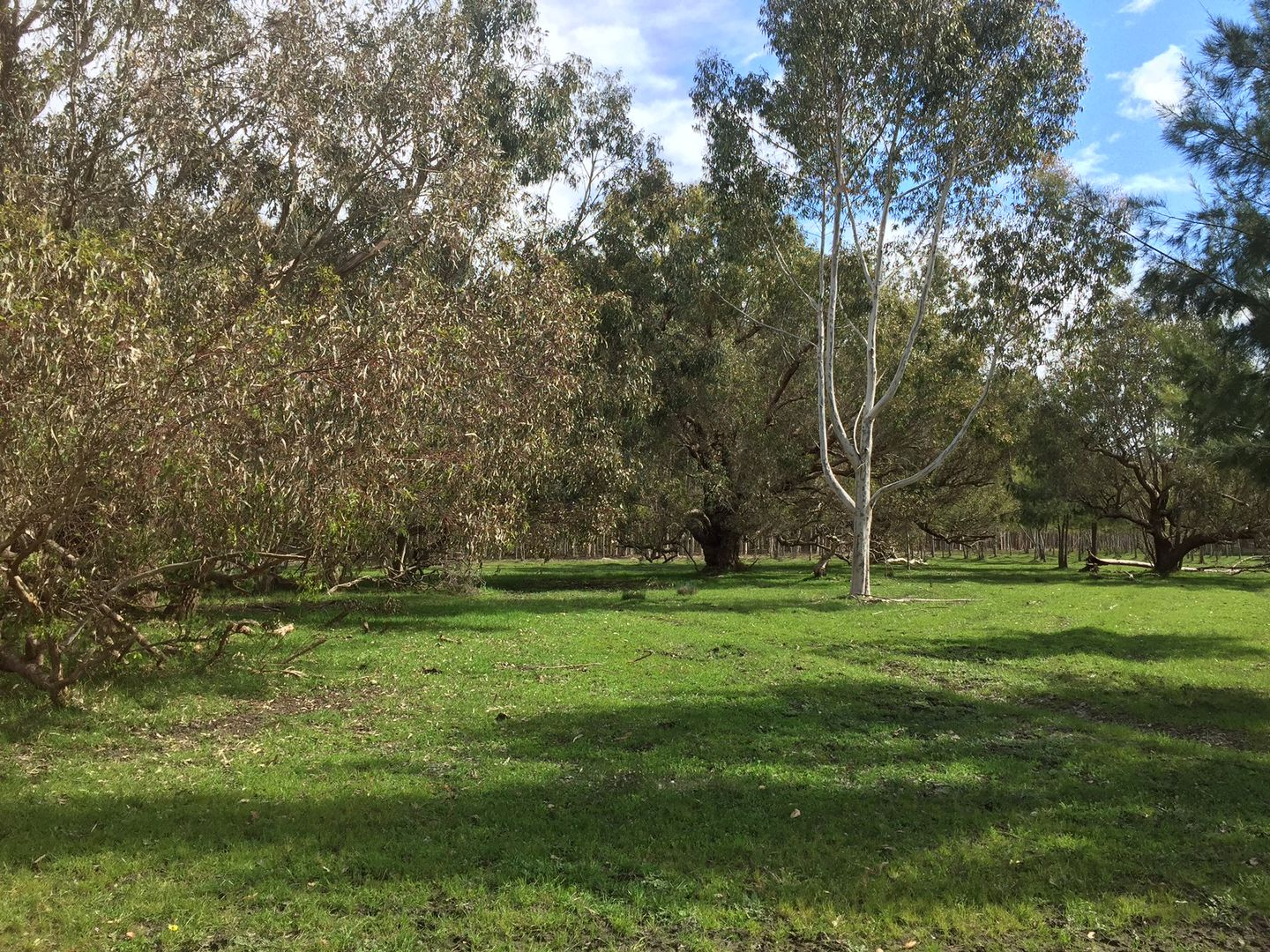 Lot 22 Fishermans Road, Coolup WA 6214, Image 2