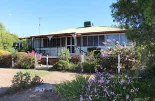 Picture of 7 Bengalla St, Yelarbon QLD 4388