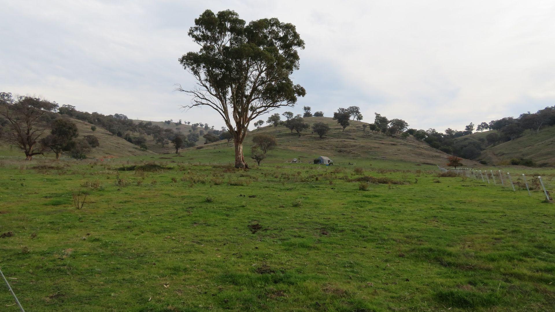 Lot 4 Five Mile Creek Road, Gundagai NSW 2722, Image 2