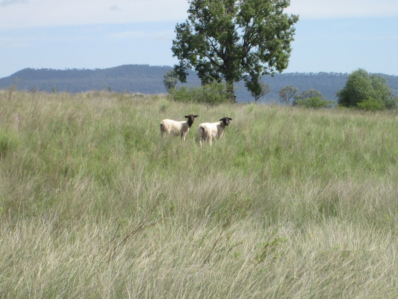 """Esmadale"", Warialda NSW 2402, Image 0"