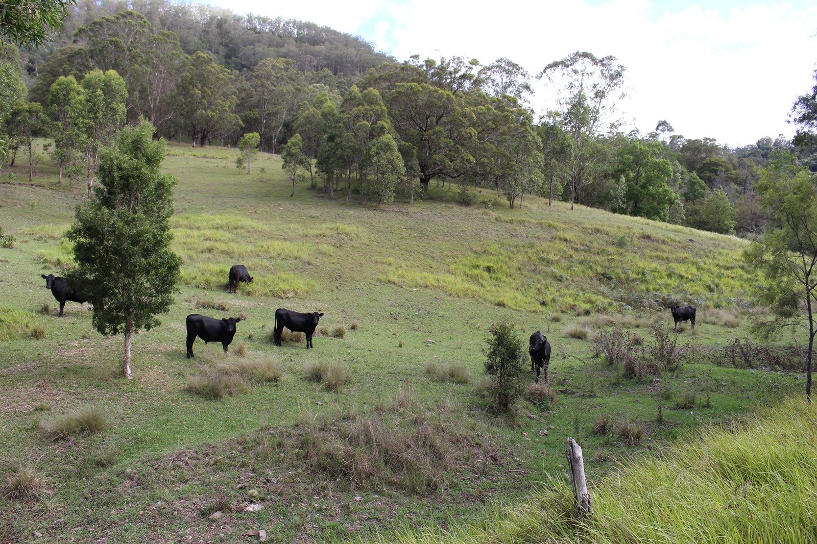 Lot 117 Bowman River Road, Gloucester NSW 2422, Image 2