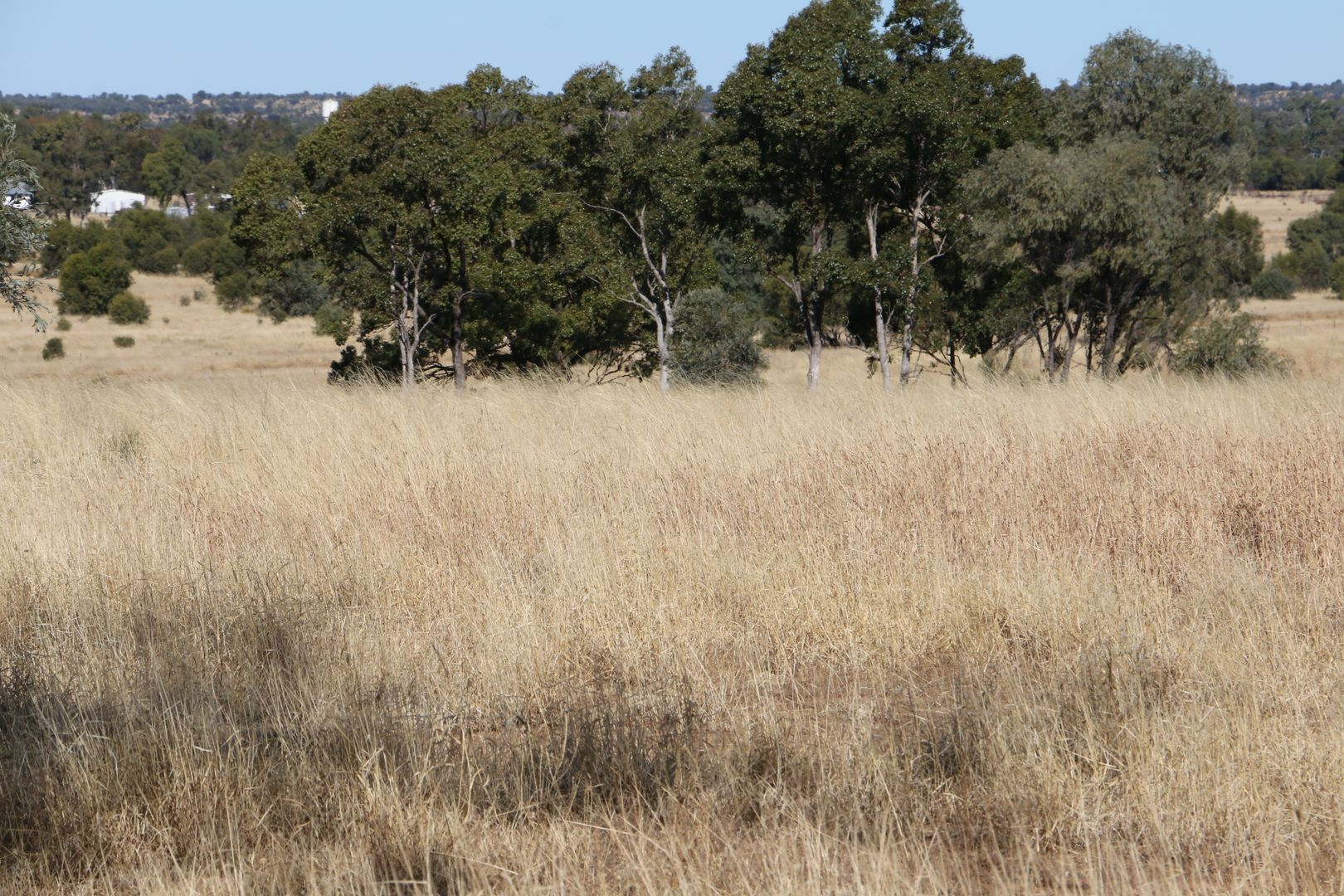 Mitchell QLD 4465, Image 2