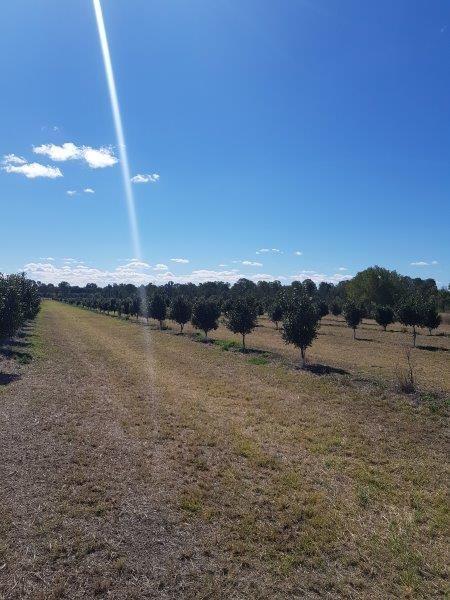 256 Drinan Road, Wallaville QLD 4671, Image 0