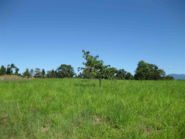Silky Oak QLD 4854, Image 0