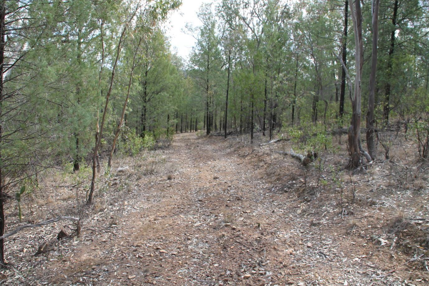 Lot 6 Mountain Creek Road, Tenterfield NSW 2372, Image 1