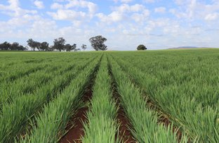 Picture of 1 Gap Road, Wirrinya NSW 2871