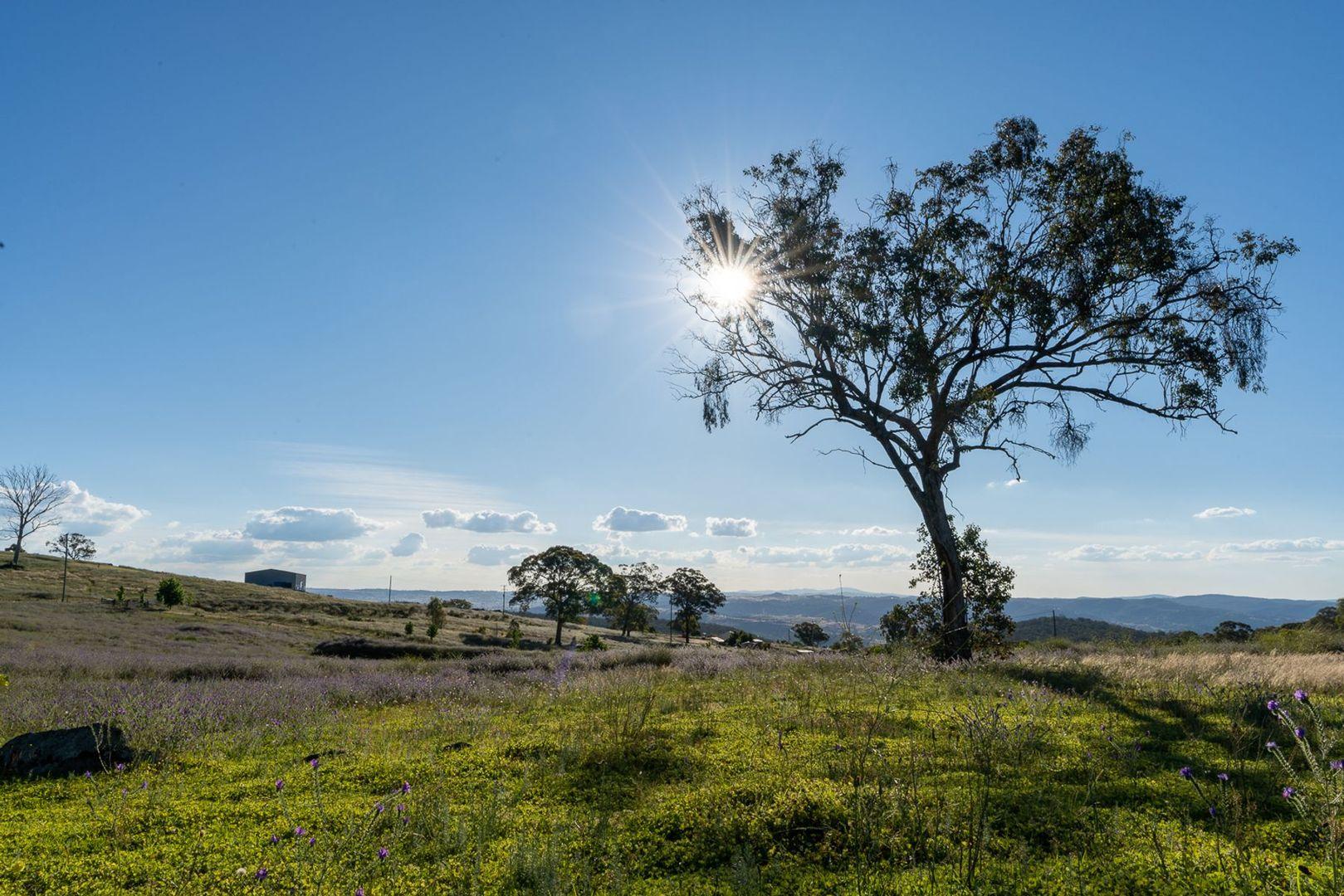 185 Peregrine Road, Billywillinga NSW 2795, Image 2