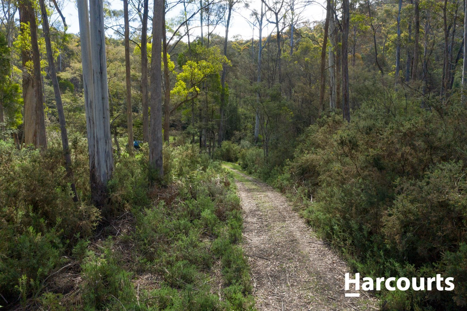 Lot 3 Mole Creek Road, Needles TAS 7304, Image 2
