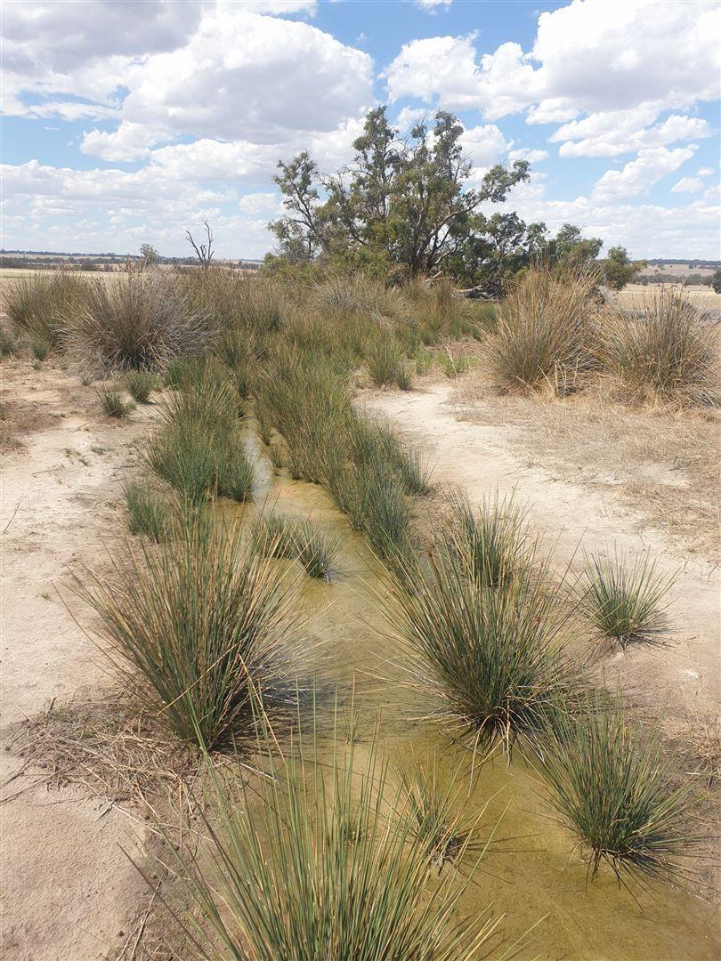 ' Phil's Wheatfield', Wedgecarrup WA 6315, Image 2