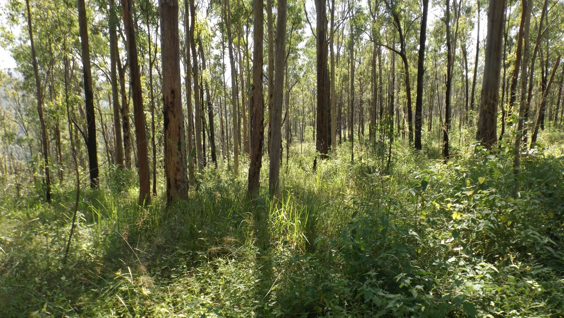 1464 Paddys Flat Road, Tabulam NSW 2469, Image 2