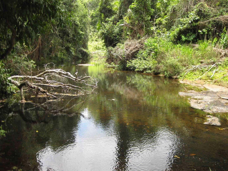 Camp Creek QLD 4871, Image 0
