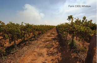 Picture of Wilga Road, Whitton NSW 2705