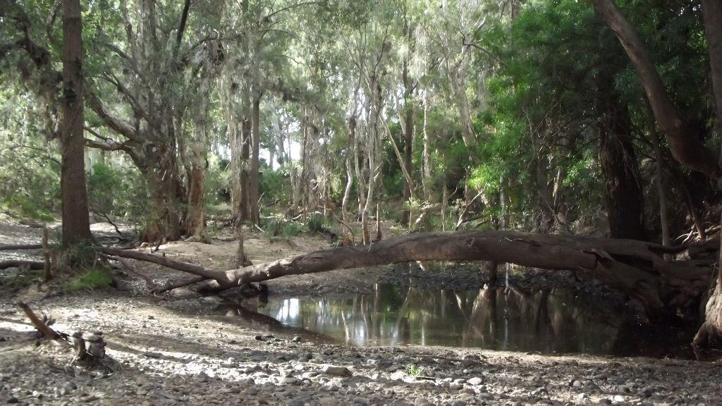 523 Airstrip Road, Nebo QLD 4742, Image 2
