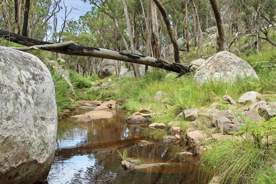 1214 Mt McKenzie Road, Tenterfield NSW 2372, Image 1
