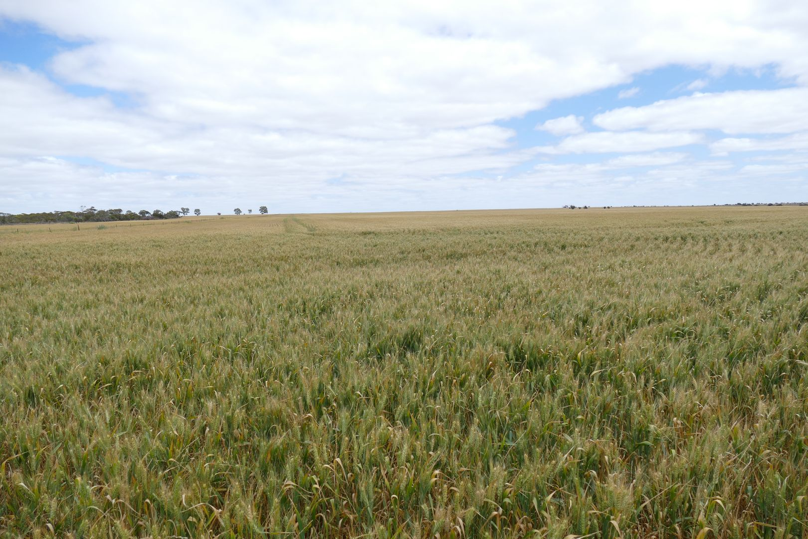 Peterson Road, Jibberding WA 6612, Image 0