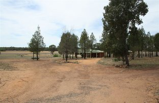 Picture of 2246 Newell highway, Gilgandra NSW 2827