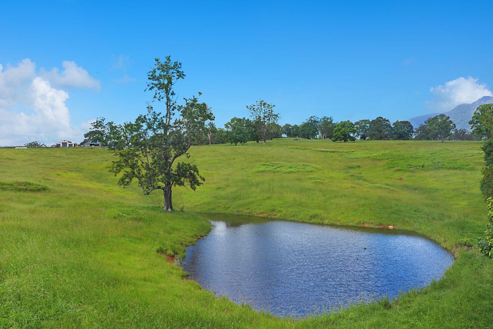 77 Back Creek Road, Back Creek NSW 2484, Image 1