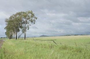 Picture of L320 Pandora Road, Alton Downs QLD 4702