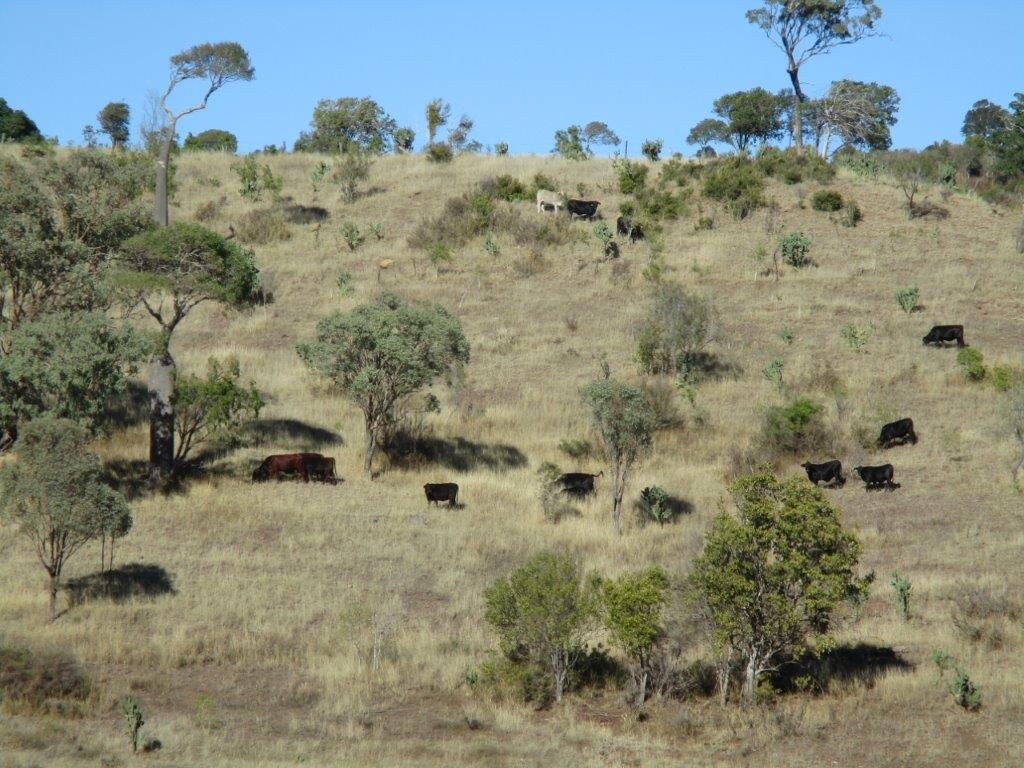 640 ACRES CATTLE GRAZING, Cooranga QLD 4408, Image 0