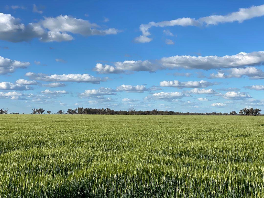 Swanley, Moree NSW 2400, Image 0