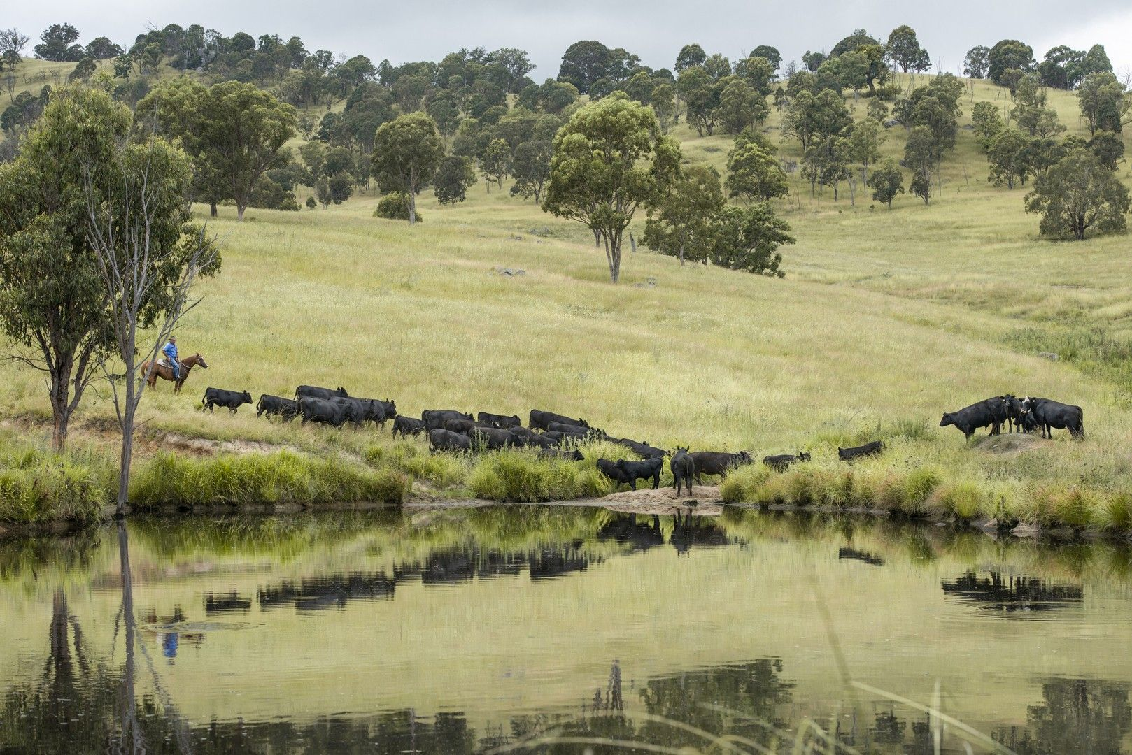 7784 NEW ENGLAND HWY, Tenterfield NSW 2372, Image 0