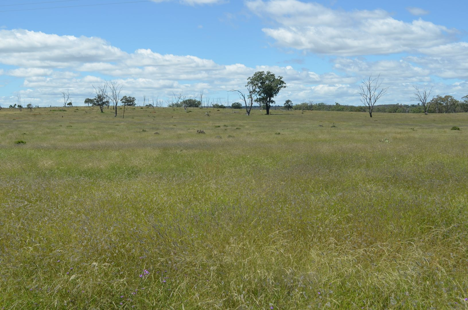 0 Mosquito Creek Road, Mosquito Creek QLD 4387, Image 1