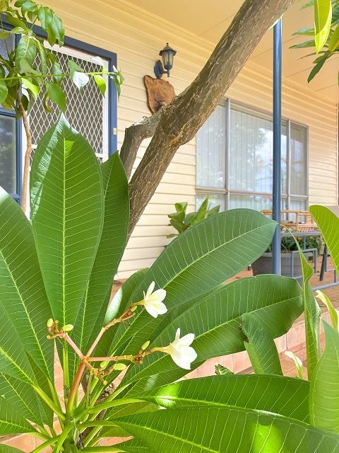 69 Bathurst Street, Cobar NSW 2835, Image 1
