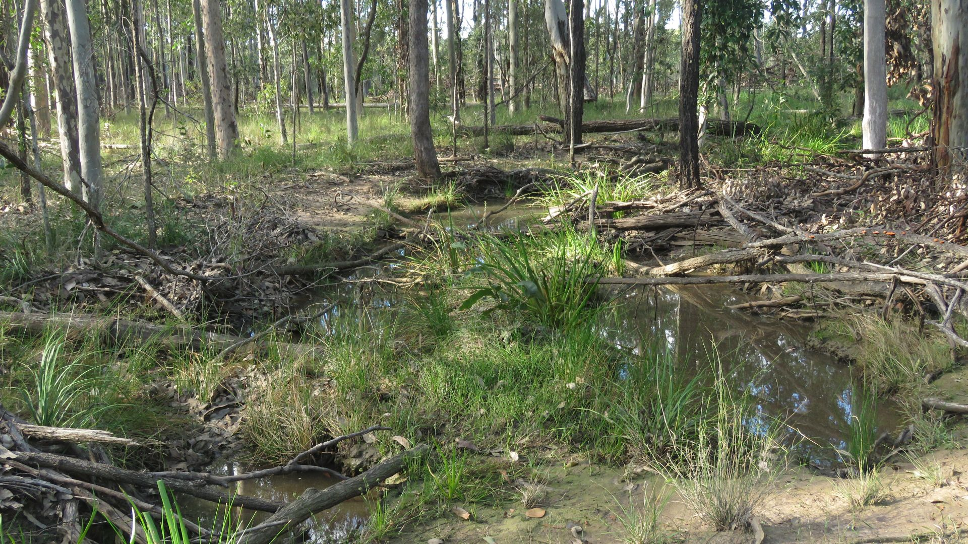 Lot 2 Clearfield Road, Myrtle creek via, Casino NSW 2470, Image 2