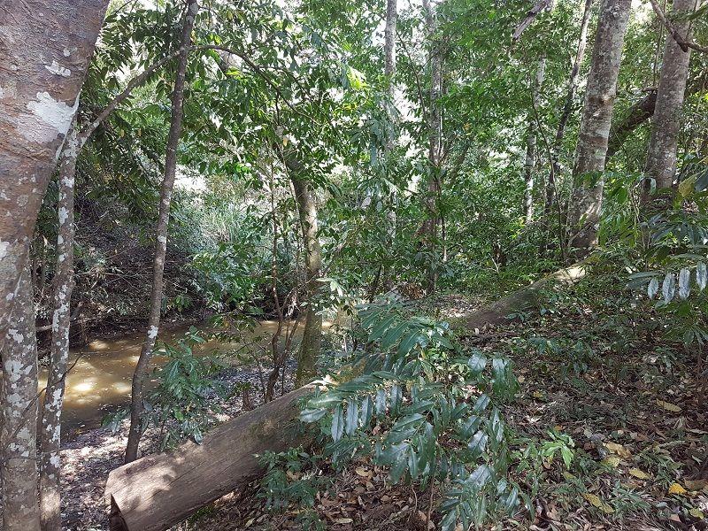 475 Delaney Creek Rd, Delaneys Creek QLD 4514, Image 2