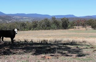 Picture of Lot 1,2 & 29 New England Highway, Tenterfield NSW 2372