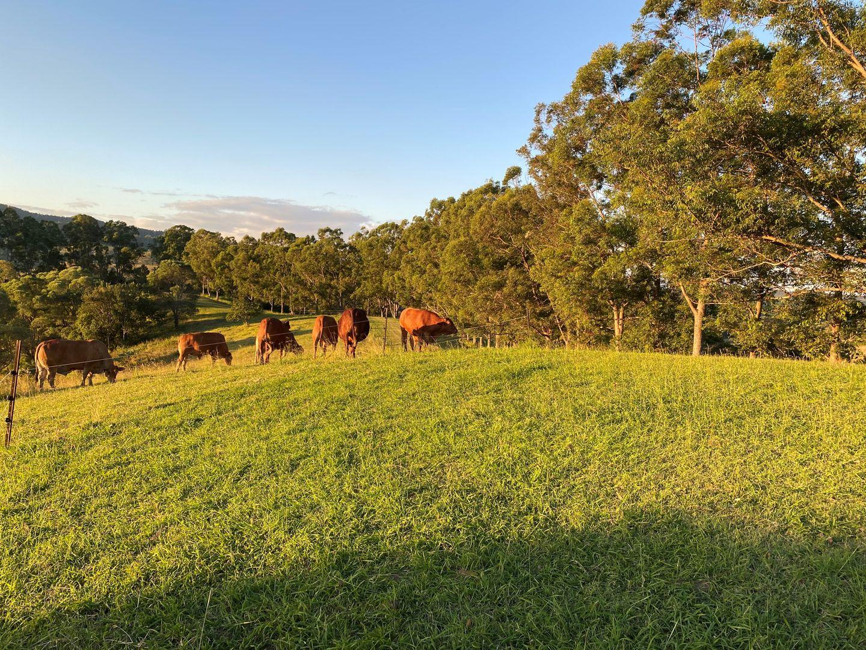 40 Donnellys Road, Ridgewood QLD 4563, Image 2