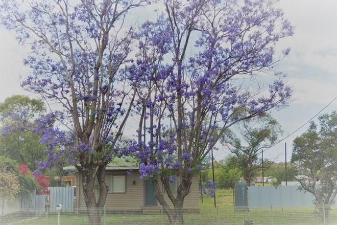Picture of 48 Yarran Street, COONAMBLE NSW 2829