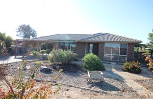 Picture of 62 Lewis Road, Waikerie SA 5330