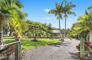 Picture of 5 Ironbark Court, Cooroy QLD 4563
