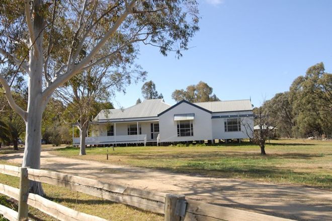 Picture of 15 PINDARA LANE, DENILIQUIN NSW 2710
