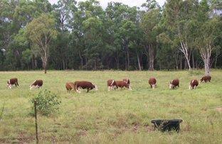 Picture of Dulacca QLD 4425